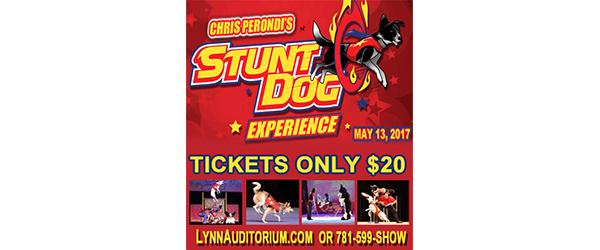 Stunt Dog Ad